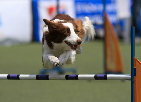 Recife terá parque exclusivo para cães