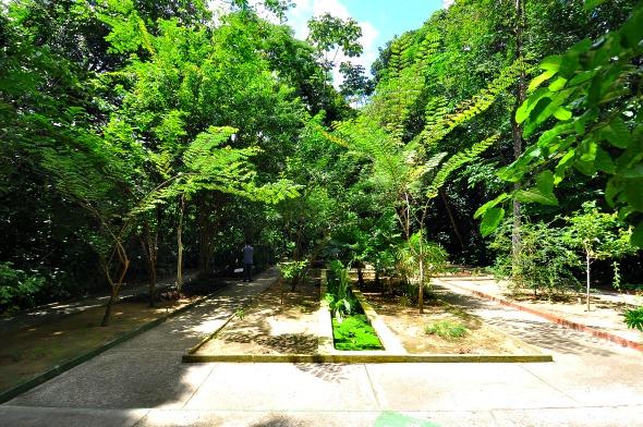 Jardim Botânico do Recife - Crédito: Julio Jacobina/DA/D.A Press