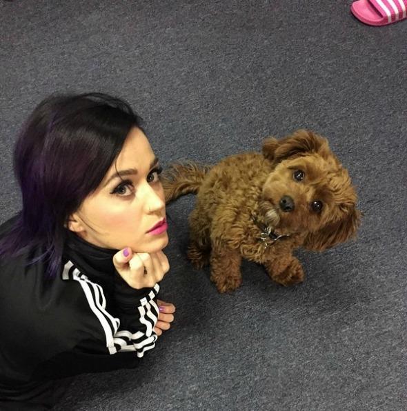 Katy Perry e seu cãozinho, Butter.  Créditos: Reprodução Instagram oficial da cantora