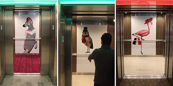 Imagens curiosas de animais nos elevadores