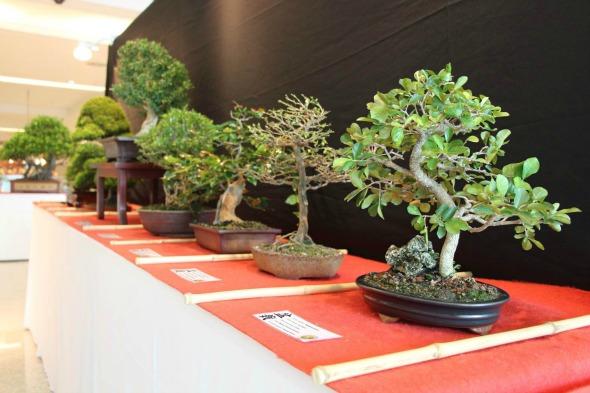 Exposição de Bonsai no Shopping RioMar. Crédito: Divulgação da exposição