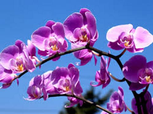 Orquídeas/DP
