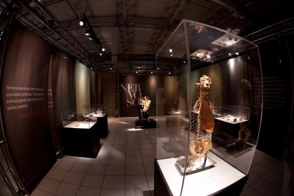 A exposição O Fantástico Corpo Humano fica em curta temporada no Shopping RioMar - Crédito: Divulgação