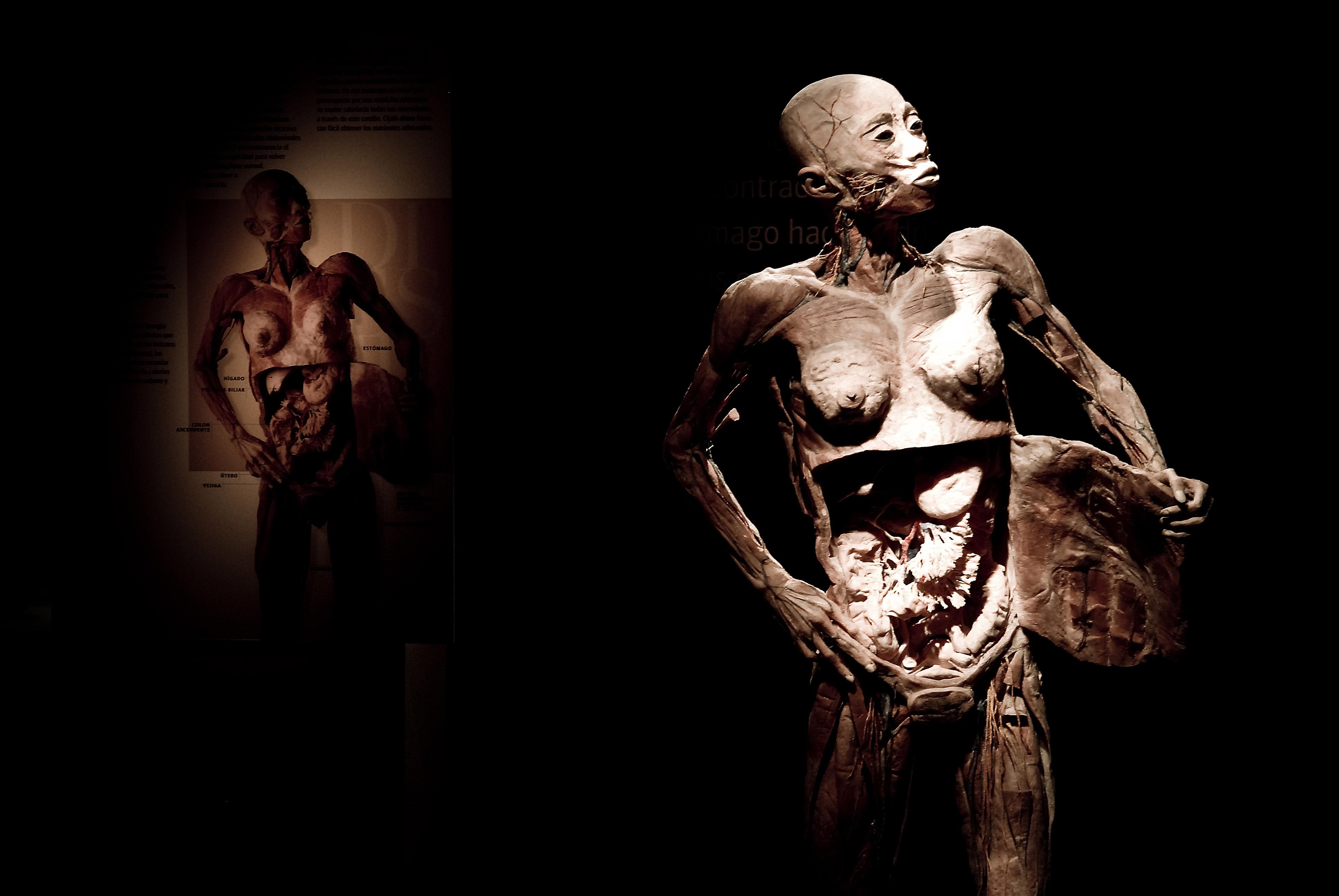 """Exposição """"O Fantástico Corpo Humano"""". Crédito: Divulgação da mostra"""