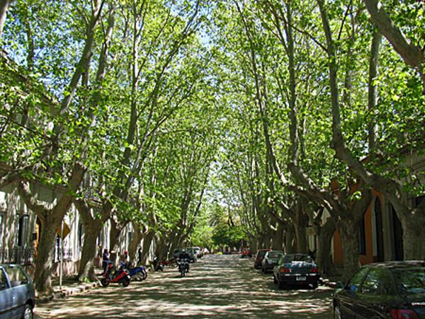 Ruas arborizadas