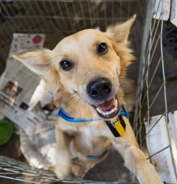 Um dos animais resgatados pelo abrigo - Crédito: Divulgação