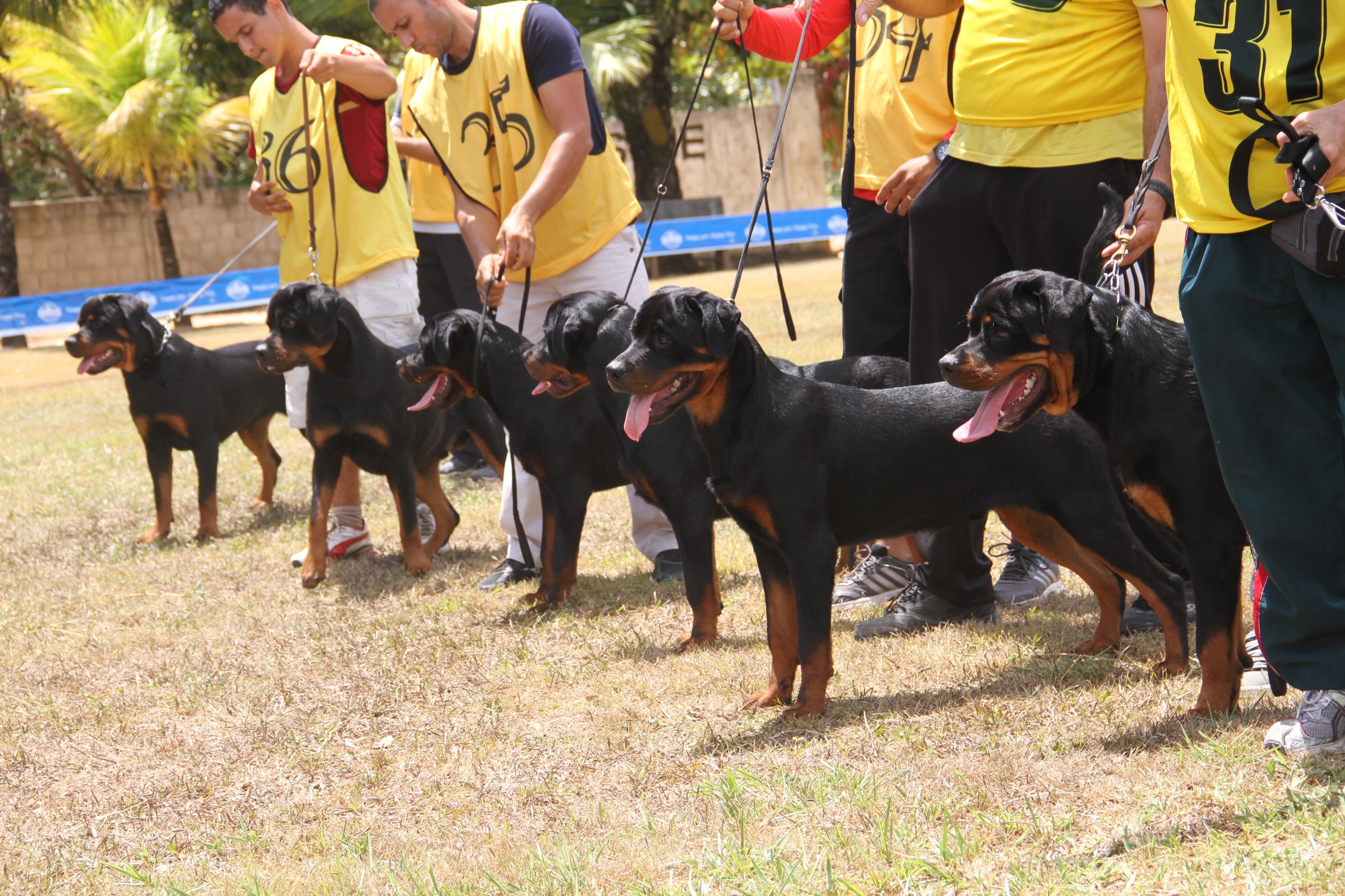 Crédito: Divulgação/Kennel Club