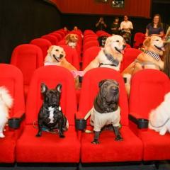 """Em ação inédita, """"cães celebridades"""" invadem sala de cinema"""