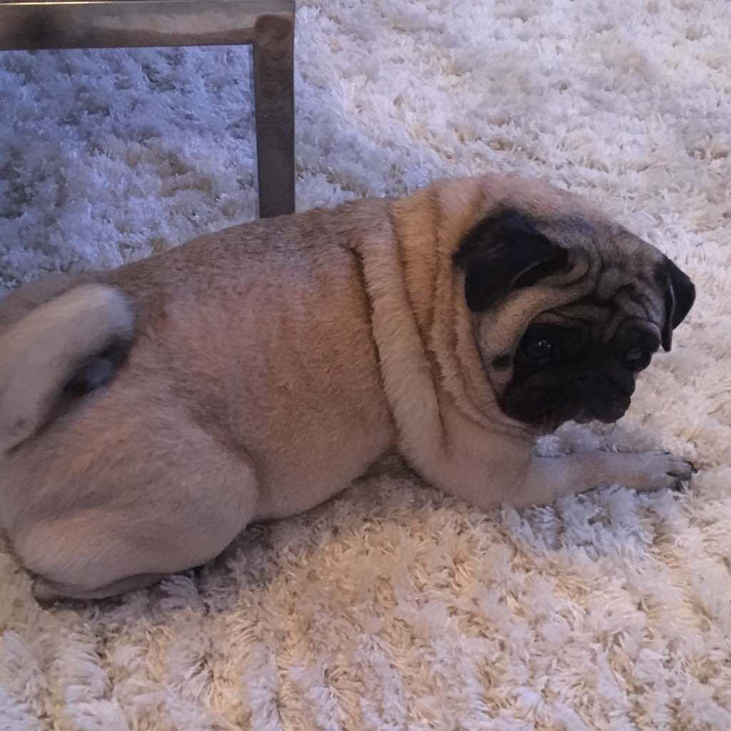 """""""Boi"""" é o apelido da cachorrinha - Crédito: Arquivo Pessoal"""