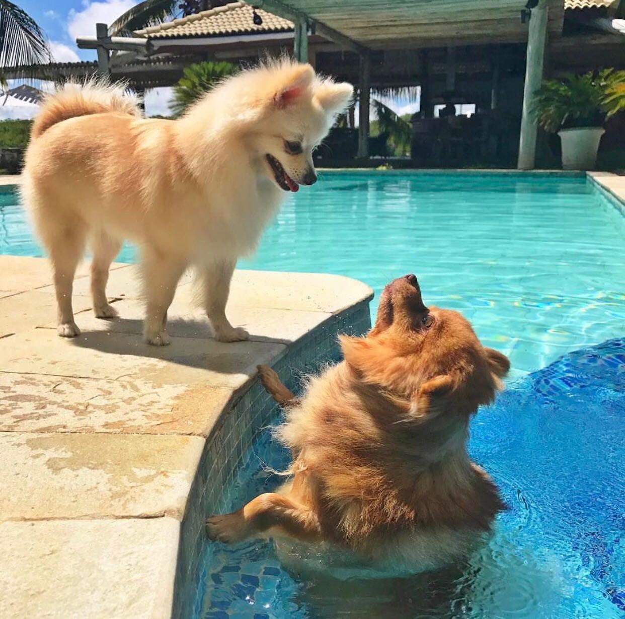 Jolie e Bono curtindo um banho de piscina em Toquinho - Crédito: Arquivo pessoal