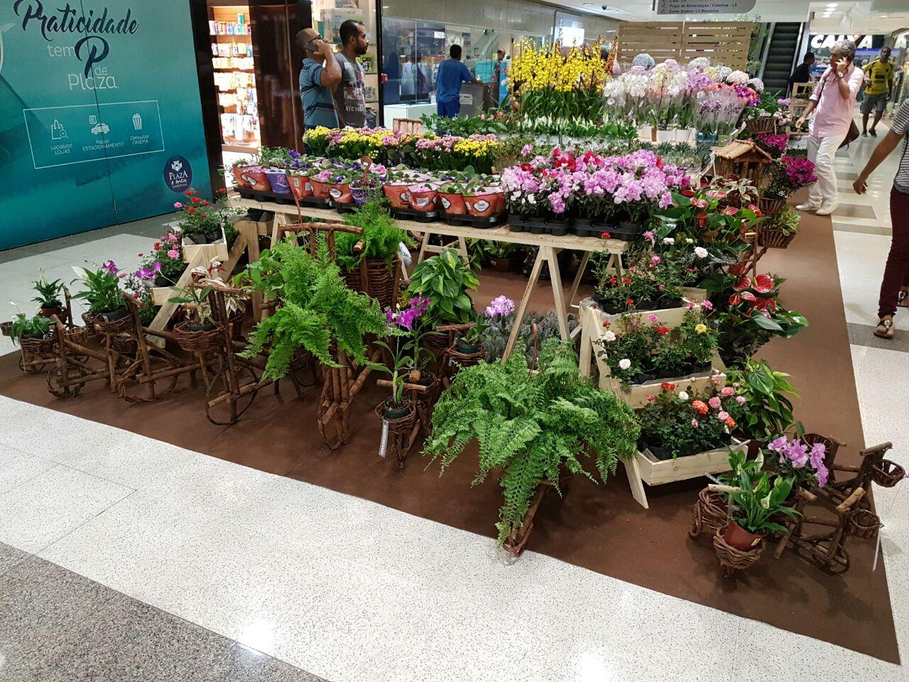 Feira de Flores - Crédito: Divulgação