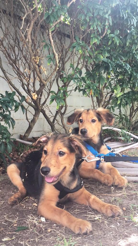 Os cachorrinhos mudaram a vida do casal - Crédito: Arquivo pessoal