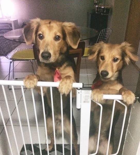 As personalidades dos cachorros são bem definidas pelos pais - Crédito: Reprodução/Instagram