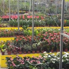 Feira de flores e plantas aporta em Aldeia