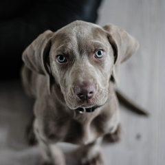 Feira para adoção de cães ganha espaço em Casa Amarela