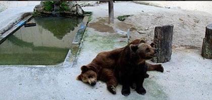Parque Dois Irmãos se posiciona sobre denúncia de maus tratos aos ursos