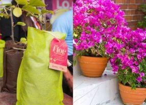 Garanhuns distribuiu mudas na campanha Mais Flor, Por Favor